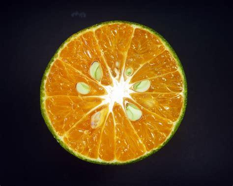 stock photo  circle citrus citrus fruit