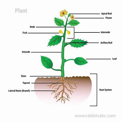 Parts Root Plants Roots Plant Edible System