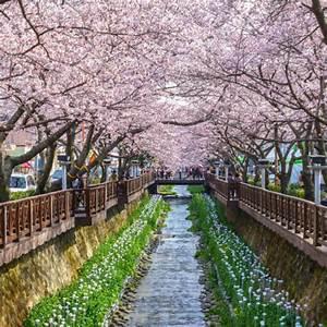 16% Off, 2018 Korea Jinhae Cherry Blossom Festival 1