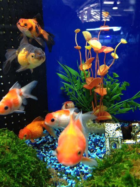 aquarium aix en provence aquarium aix en provence 28 images aquarium g 233 ant sur mesure sur tropez aix en provence
