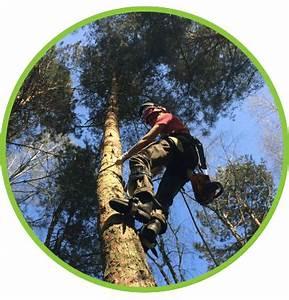 Was Kostet Baum Fällen : baumpflege springborn f llen fr sen pflanzen ~ Orissabook.com Haus und Dekorationen