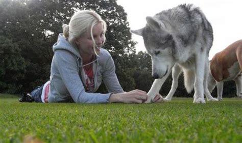 feed  dog    canine superfoods life life style expresscouk