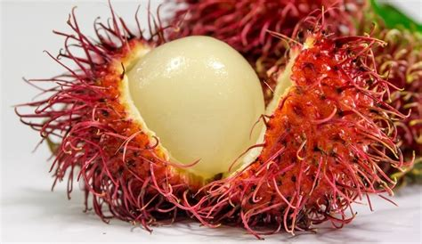 lychee fruit inside 20 exotic fruits you must try at least once healthy food