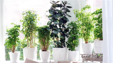 plante dans une chambre les plantes vertes dans la chambre annikapanika of plante