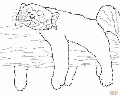 Coloring Pages Panda Fox Sleeping Drawing Outline