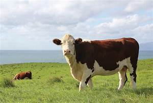 Beef Researcher Mentorships Available