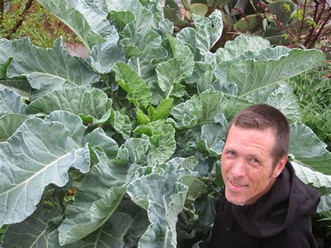 worlds largest kale root simple