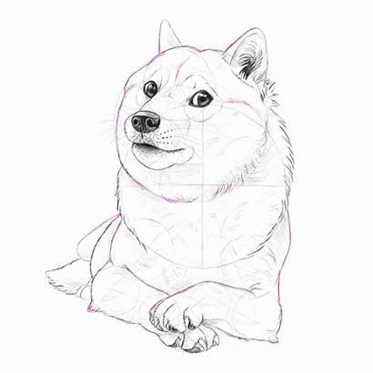 Doge Shiba Draw Inu Fun Coloring Many