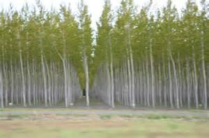 Tree Farm Oregon