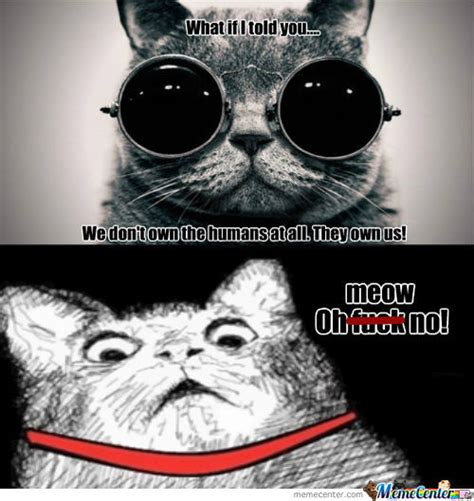 Morpheus Cat Meme - rmx morpheus cat will show cats the real world by archerjoe meme center