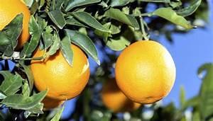 Exotische Früchte Im Eigenen Garten : exotische fr chte ziehen ~ Lizthompson.info Haus und Dekorationen