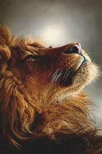 luna-as-a-lion   Tumblr