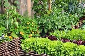 Wann Welches Gemüse Pflanzen Tabelle : welche kr uter vertragen sich wenn der nachbar nicht will gartenblog gittes blog m rz 2016 ~ Frokenaadalensverden.com Haus und Dekorationen