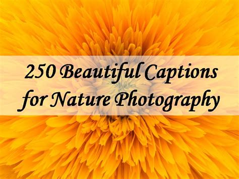 beautiful captions  nature photography