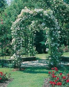 Support Pour Rosier Grimpant : faire grimper un rosier sur une tonnelle roses guillot ~ Premium-room.com Idées de Décoration