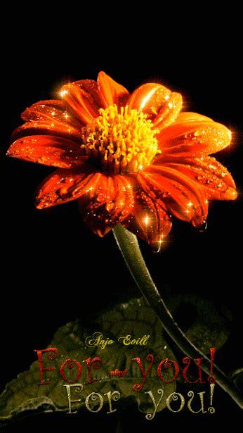 flowers gif  love lovely animated flower gif