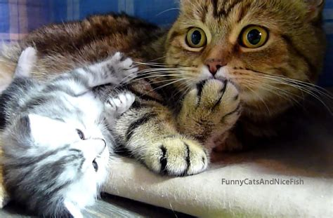 Top Playful Funny Cats And Kittens