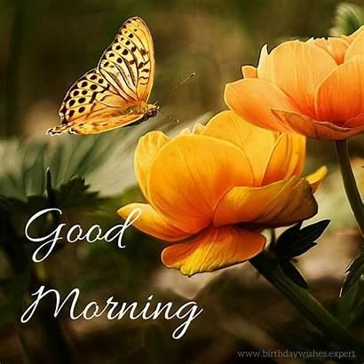 Morning Butterflies Inspirational