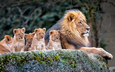 Beautiful Nature Animal Wallpapers - baby animals wallpaper 183