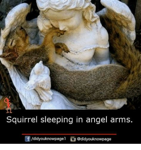 In The Arms Of An Angel Meme - squirrel sleeping in angel arms didyouknowpagel meme on sizzle