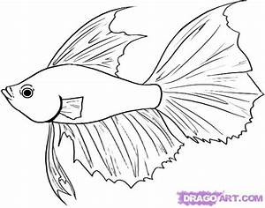 How to Draw a Betta, Step by Step, Fish, Animals, FREE ...