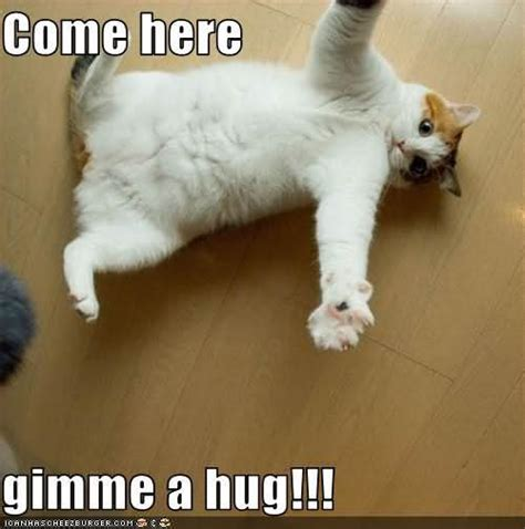 Hug Memes - cat cute hug come hug come on hug me picture images photos pictures