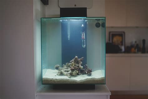Nano Reef  Fluval Edge 2  Cycling The Tank  Justin Fox