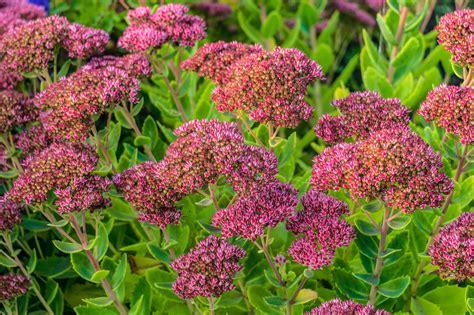 outdoor plants   kill