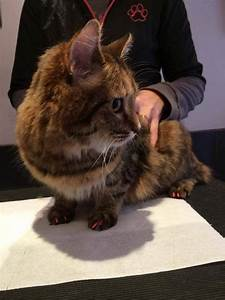 Anti Griffe Chat : prot ge griffes softclaws pour chats allauch entre ~ Premium-room.com Idées de Décoration