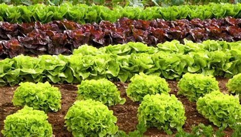 Tipps Für Den Eigenen Bio-garten