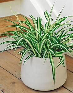 Zimmerpflanzen Für Schlafzimmer : zimmerpflanzen im schlafzimmer sinnvoll oder ungesund ~ A.2002-acura-tl-radio.info Haus und Dekorationen