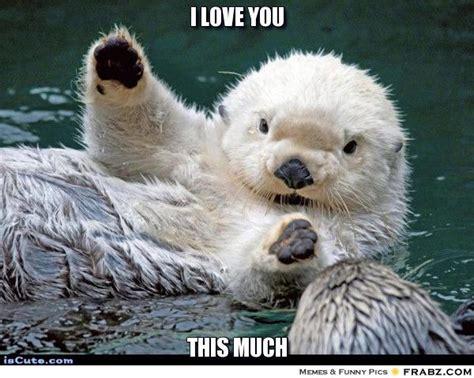 Sea Otter Meme - so fucking cute otter spirit animal pinterest otter meme and generators