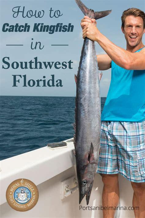 kingfish catch florida southwest fishing learn pro