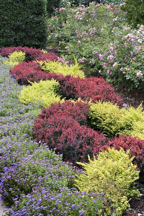 beautiful plantes couvre sol plein soleil 12 r 233 aliser un massif avec des couvre sol sedgu