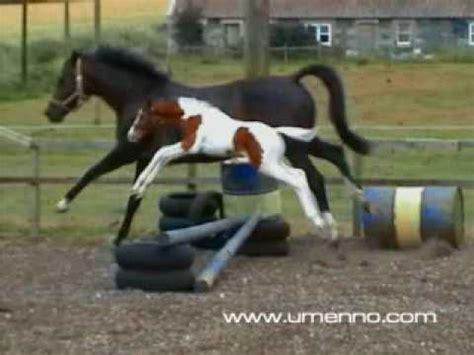 Cute Baby Horse Jumping