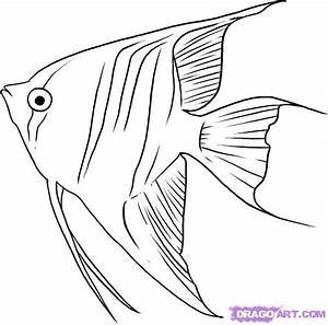 How to Draw Angelfish, Step by Step, Fish, Animals, FREE ...