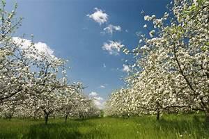 Wann Apfelbaum Pflanzen : apfelbaum ausd nnen wann wie macht man das ~ Lizthompson.info Haus und Dekorationen