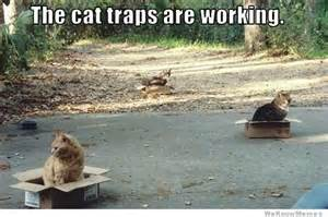 how to trap a cat the cat traps are working weknowmemes