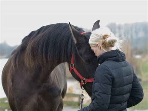 horse were ihearthorses meant horseback rider signs ride smith via source flickr ian alone riding safety tips leasing consider reasons