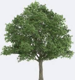 northern oak species page