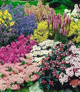 Blühende Pflanzen Winterhart : staudenbeet gartenfreude 15 pflanzen g nstig online ~ Michelbontemps.com Haus und Dekorationen