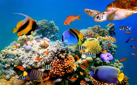 underwater hd corals resolution widesreen