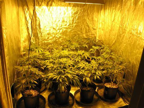 glow grow advantages  marijuana indoor grow room