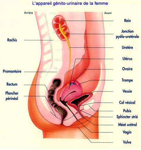 fistule ano vulvaire et rupture sphinct 233 rienne forum