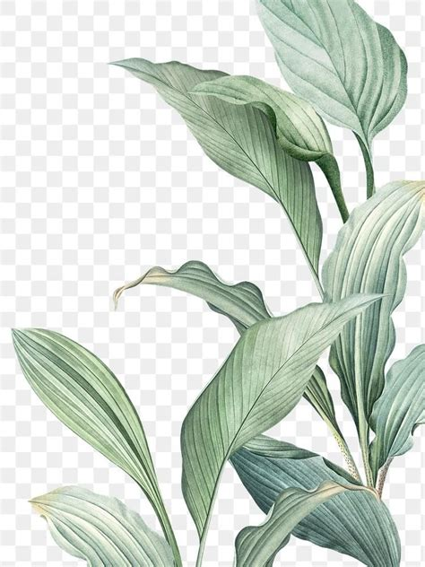 Hand drawn tropical leaves PNG transparent background ...