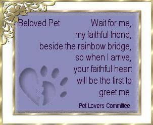 grieving  loss   beloved pet images