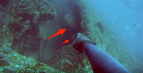 grouper goliath fish monster diver spear multiple fight got ve attack strong