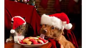 Cute Dog and Cat Christmas 4K Wallpaper | Free 4K Wallpaper