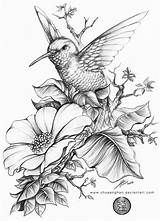 Hummingbird Drawings Deviantart A4 Animals sketch template