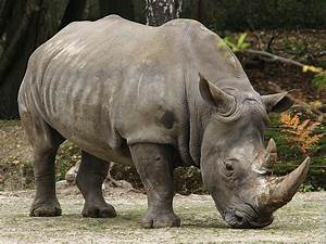 10 Endangered Species of Animals - Endangered Animals ...
